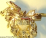 beast wars two - lucky draw chrome gold lio convoy  image 4