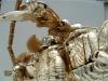 gold magmatron image 122